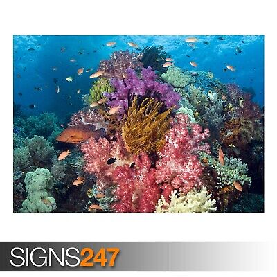 Tropical Sea Fish Giant Poster A0 A1 A2 A3 A4 Sizes