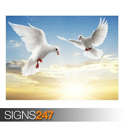 FLYING DOVE 3642 Animal Poster Picture Poster Print Art A0 A1 A2 A3 A4