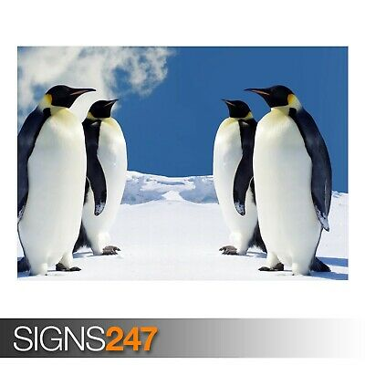 3514 HQ PENGUINS Picture Poster Print Art A0 A1 A2 A3 A4 Animal Poster