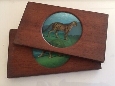 """TWO MAGIC LANTERN SLIDES """"Felines Leopard and Panther"""" hand painted."""