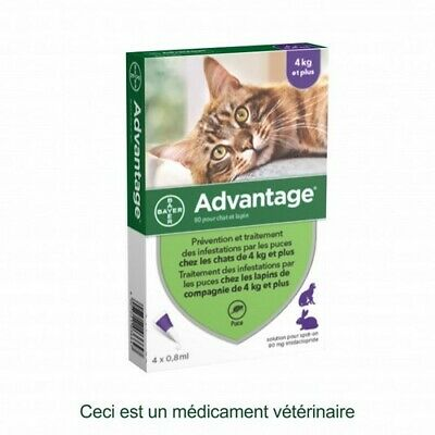 Bayer Advantage 80 Traitement Infestations de Puces pour Chats - Pipette de 4 ml