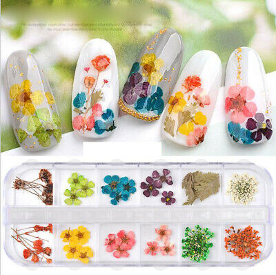 Real Dried Dry Flowers 3D Nail Art Decoration Design DIY Tips Manicure 12 Colors