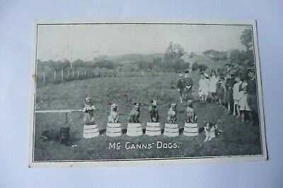 Early Printed Social History Postcard Mc Canns Performing Dogs