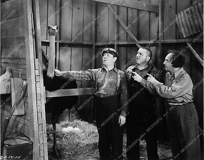 3389-33 Three Stooges Moe Larry Curly and ostrichcomedy short subject 3389-33 33