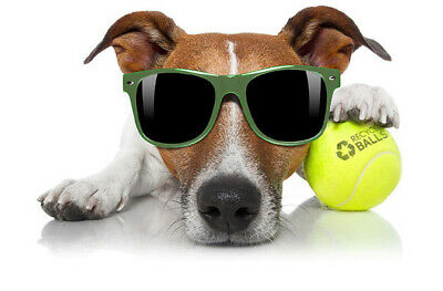 25 used tennis balls - IDEAL DOGGIE BALLS - Grade C - FREE SHIP - Support us!