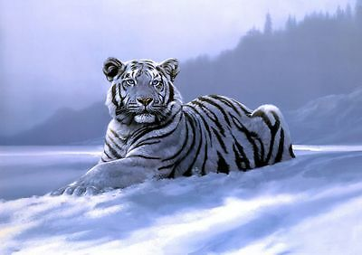 Siberian White Tiger in Snow Canvas Painting Art Poster Print Animal Wild Cat