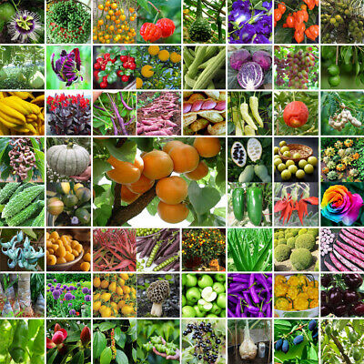 Mixed Rare Giant Vegetable Flower Fruit Seeds Home Garden Decor Plants Colorful