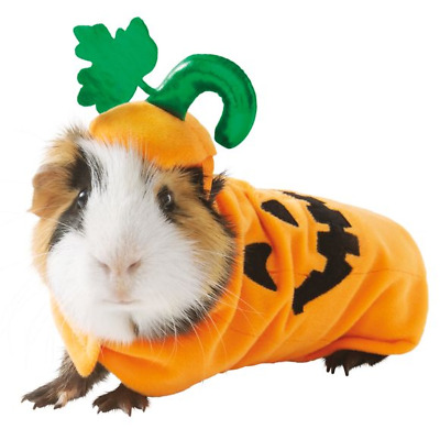 Guinea Pig Small Pet Pumpkin Holiday Halloween Costume Clothes Cute Funny Gift