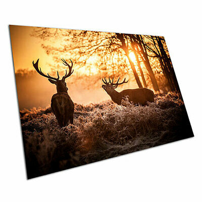 Poster print Red Deer in the Morning Sunshine mist wall Poster Art A1 Poster