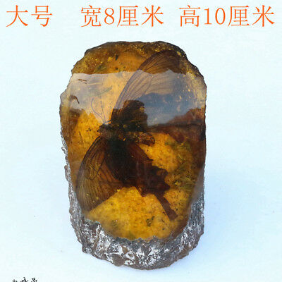 Amber Beeswax Amber insect butterfly specimens