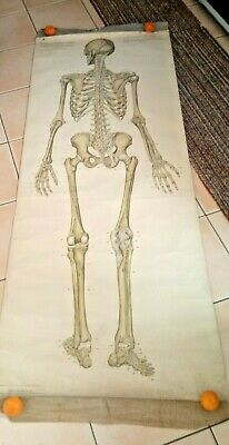 DEM BONES: Vintage & uber cool Frohse anatomical skeleton linen chart diagram
