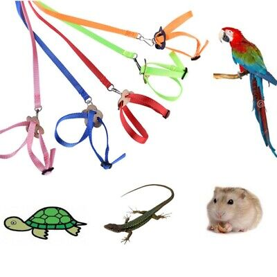 Parrot Bird Leash Harness Outdoor Adjustable Training Rope Anti Bite Flying Band