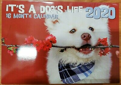 2020 Calender Wall Hanging 16 Month Calender Dogs