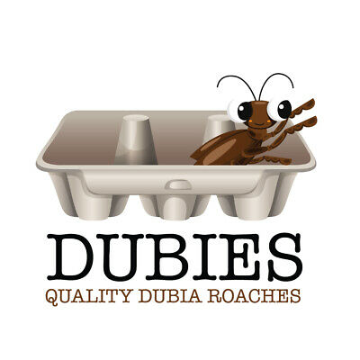 100 Nymphs Baby Bearded Dragon Food Quality Dubia Roaches Fully Gut loaded Prem
