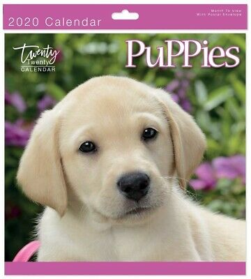 2020 Puppies Square Wall Calendar - Wall Planner - 05602.
