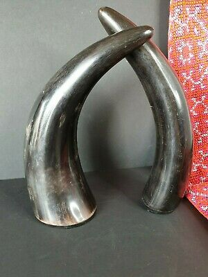 Old Pair of Black Buffalo Horns …beautiful display set