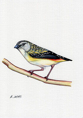 Bird, yellow, black, red, white, Watercolor Original Painting Art, Quick sketch