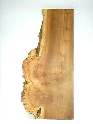 Spalted Burr English Elm wood board. Tabletop, woodturning, carving, plank. 3516