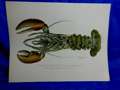 RARE EARLY Antique Denton Chromolithograph Print American Lobster