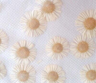12 Pcs Dried Pressed Flowers Small Daisy for Scrapbooking Arts Craft Supplies