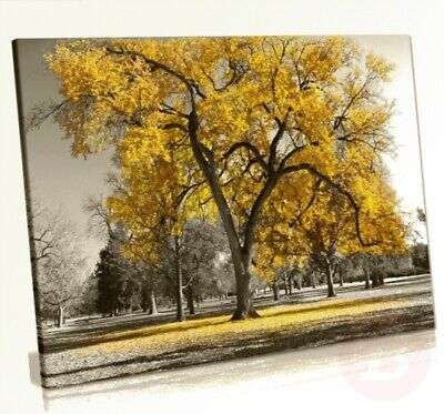 Large Tree Yellow Leaves Black White Nature Canvas Wall Art Picture Print ...