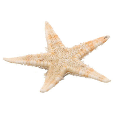 100 pcs Natural Starfish Decor Jewelry Photo Frame Candle Crafts Accessories YI