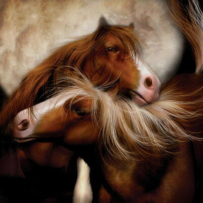 Horse Love Oil Paintings Giclee Art Printed on canvas 16x16 inch L1436