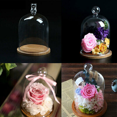 Clear Glass Display Cloche Bell Jar Plant Dome Immortal Preservation Wooden Base