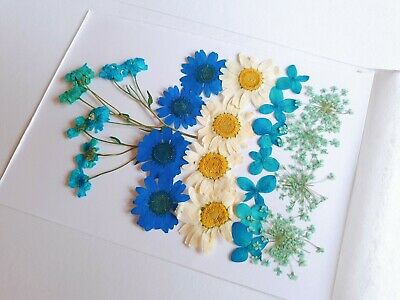22pcs Pressed Flower Organic Natural Dried Flowers DIY Art Crafts Decor
