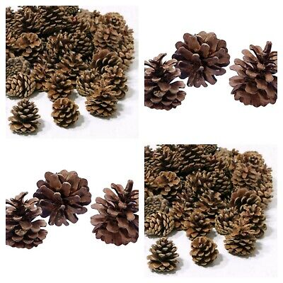 Austracia Pine Cones Christmas wreath / Tree decorations Choose your amount