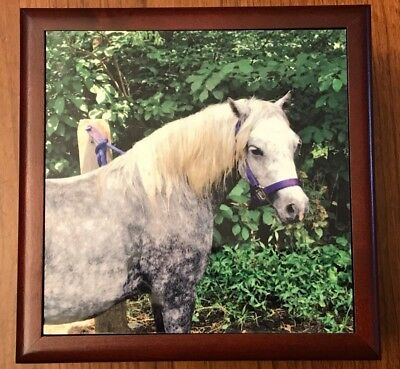 Horse Photo Wood Jewelry Trinket Box Velvet Lining with Purple Harness Trees