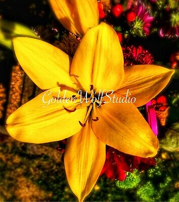 Digital Photo Picture Image - Bloom Bright 2 - Free Shipping
