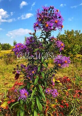 Digital Photo Picture Image - Wildflowers -  Free Shipping