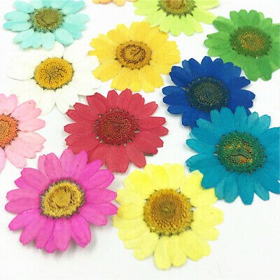 12Pcs Pressed Dried Natural-Flower Epoxy Resin Nail Craft DIY Phone Decor Salab