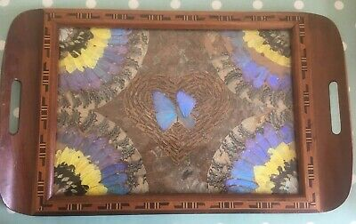 Real Butterfly Wing Tea Serving Tray wood with marquetry Lepidopterology