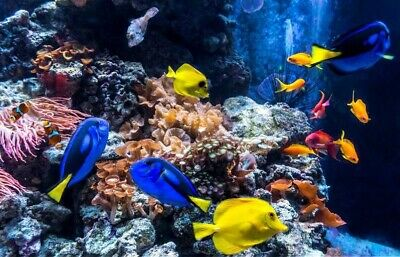 Sea Life Booking Code (2 Tickets) For Any Location/Date
