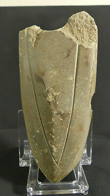 Neolithic Stone Battle Axe Germany X-RARE Engraved, Boat Shaped c. 2800-2400 BC