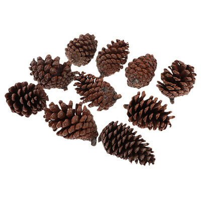 10x Natural Dried PineCone Large 6-8cm For Vase Filler Crafting Decoration