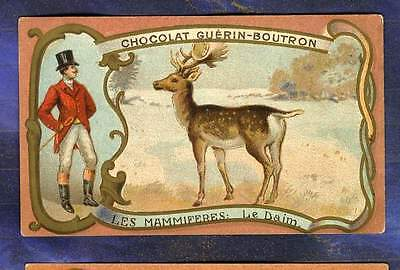 CHROMO GUERIN-BOUTRON mammifere Daim UK Chasse à courre Hunting Deer Herold card