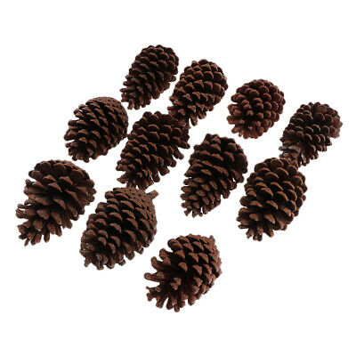 10x Natural Dried PineCone Large 8-10cm For Vase Filler Crafting Decoration