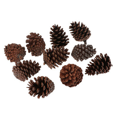 10x Natural Dried Pine Cones Large 6-8cm For Vase Filler Crafting Decoration
