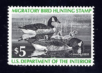 US Stamps NH Mint * $5.00 1976 US Federal Duck Hunting Issue * RW43