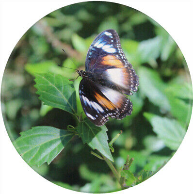 Crystal Dome Button Monarch Butterfly on Leaf  BUG6 FREE US SHIPPING