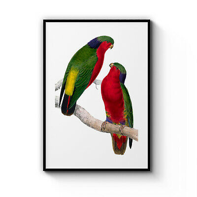 C A Red Lorikeet Perched High In The Art Print Home Decor Wall Art Poster