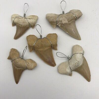 Otodus Tooth Pendant (SHARK TOOTH) Prehistoric Shark Tooth (Curved Tooth)