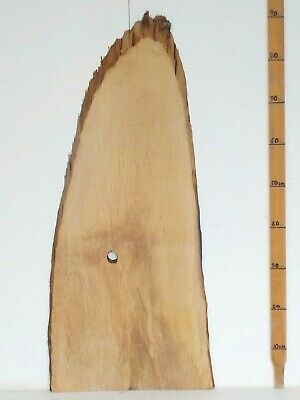 Waney edge English Holm Oak wood board. Plank, slab, shelf.  3662
