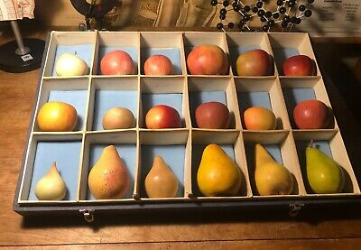 A Vintage Box Of Models Of Apple & Pear Varieties College Teaching Aids.