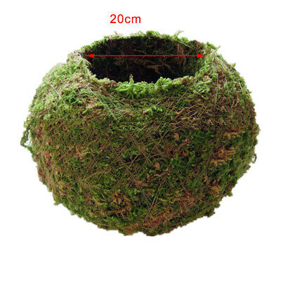 Natural Dry Moss Ball Bonsai Sphagnum Moss Planting Ball Flowerpot 18cm/7""
