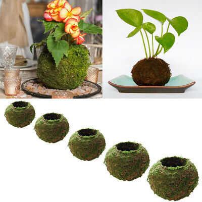 Natural Dry Moss Ball Bonsai Sphagnum Moss Planting Ball Flowerpot 5 sizes