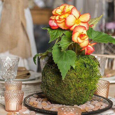 Natural Dry Moss Ball Bonsai Sphagnum Moss Planting Ball Flowerpot 12cm/4.7""